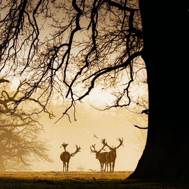 """Wild Deer Silhouette"" stock image"