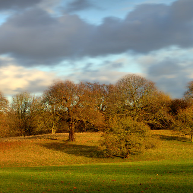 """Weald Country Park"" stock image"