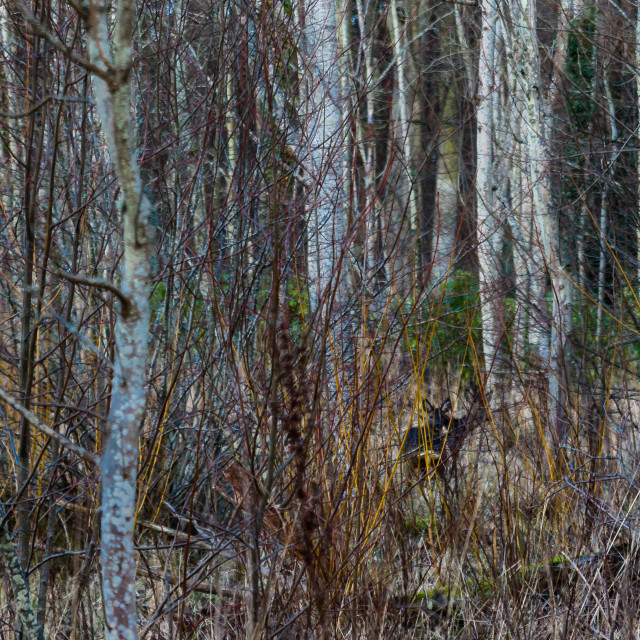 """""""Young deer in the woods"""" stock image"""