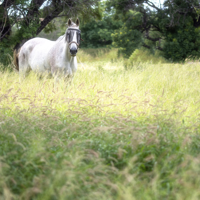 """""""Horse in grass field"""" stock image"""