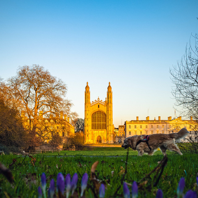 """""""Kings College Chapel Sunset"""" stock image"""