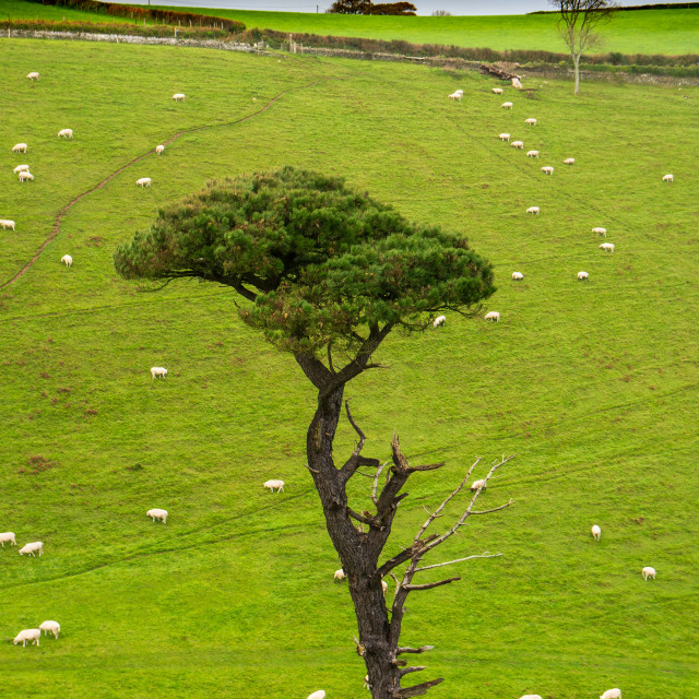 """""""The Lone Tree, Forest Cove England"""" stock image"""