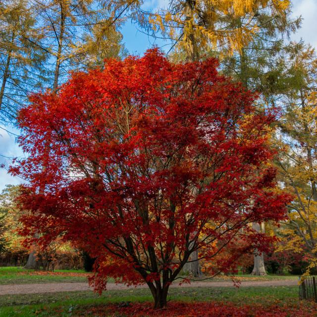 """Autumn Sunshine, Westonbirt England"" stock image"