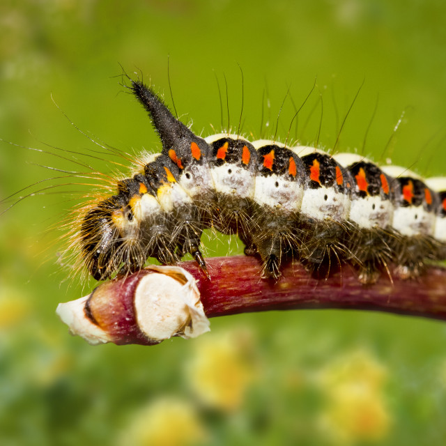 """Caterpillar on a plant stem"" stock image"