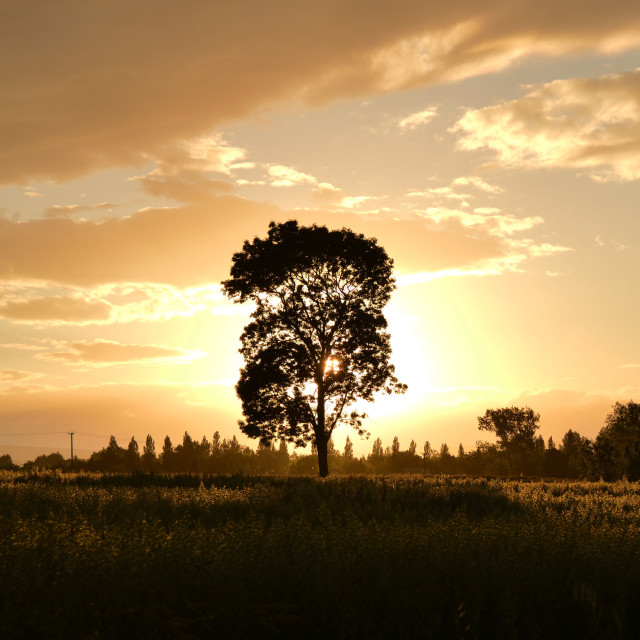 """""""Landscape and tree"""" stock image"""