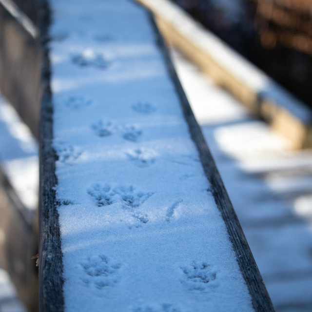 """""""Squirrel Tracks in Snow on a Wooden Railing"""" stock image"""