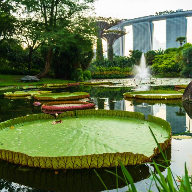 """The Marina Lilly Pad, Singapore"" stock image"