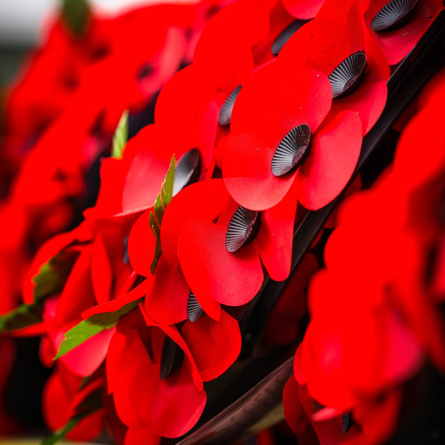 """""""Remembrance Day Poppy"""" stock image"""