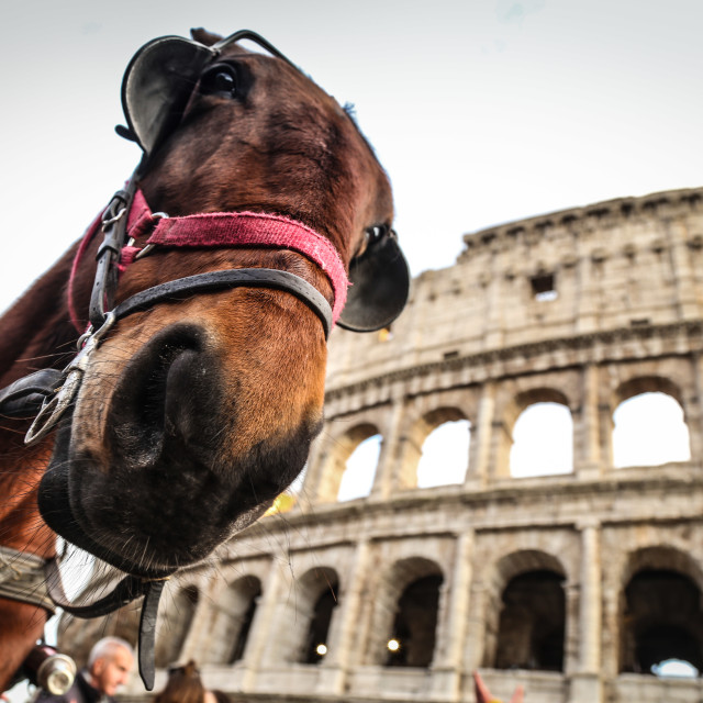 """Colleseum from the best angle"" stock image"
