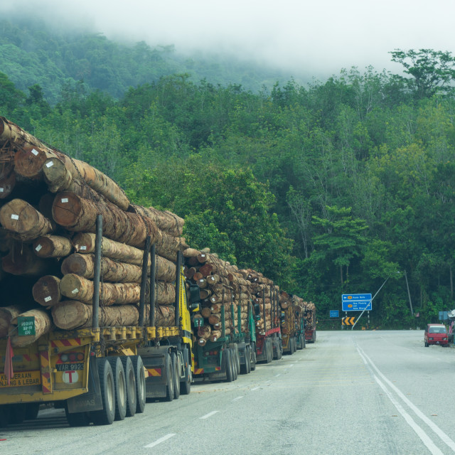 """""""Logging by the Lorry Load"""" stock image"""