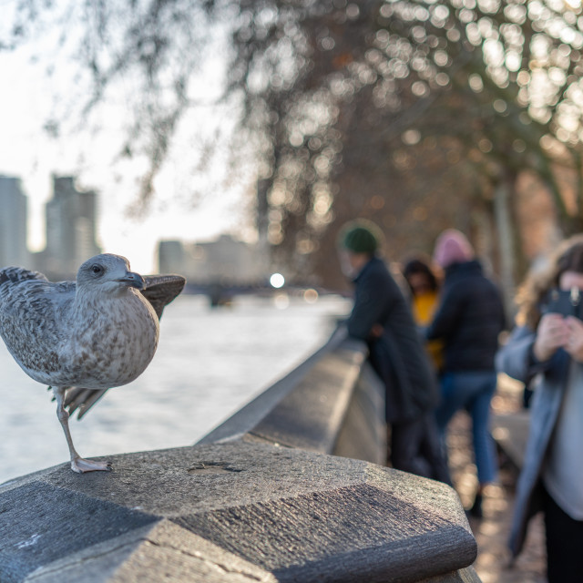 """London, England - November 29 2019 : A gull seemingly poses for a woman..."" stock image"