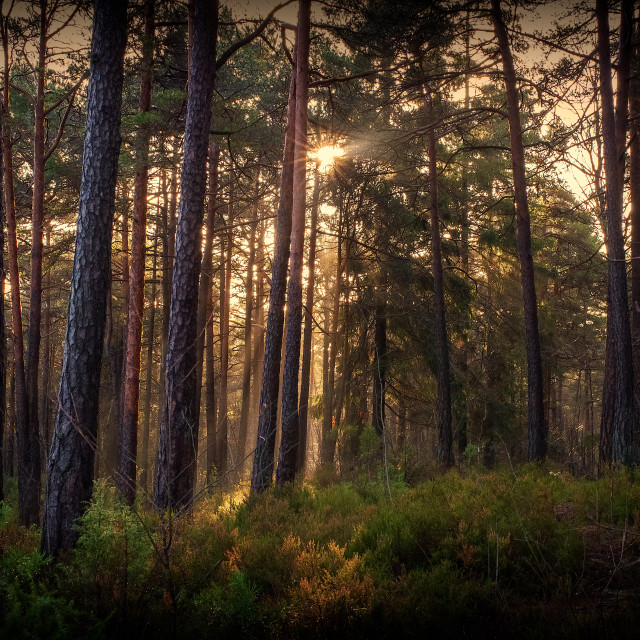 """""""Forest sun"""" stock image"""