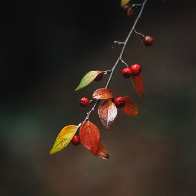 """""""Berries in the forest"""" stock image"""