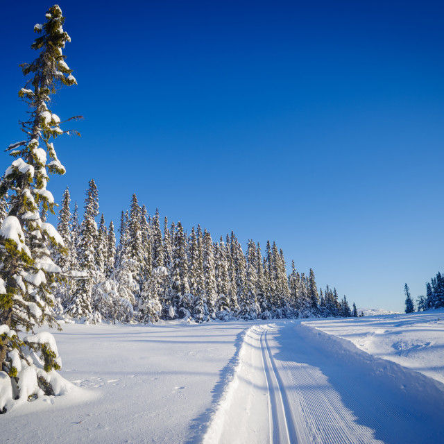 """First ski trip of 2019"" stock image"