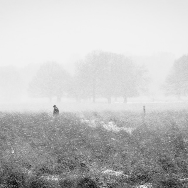 """A solitary man wanders through a park during the snow storm dubbed the Beast..."" stock image"