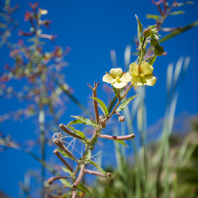 """Yellow Flowers in Baja, Mexico"" stock image"