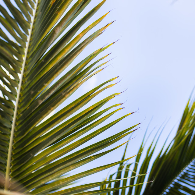 """Palm details of the Caribbean"" stock image"