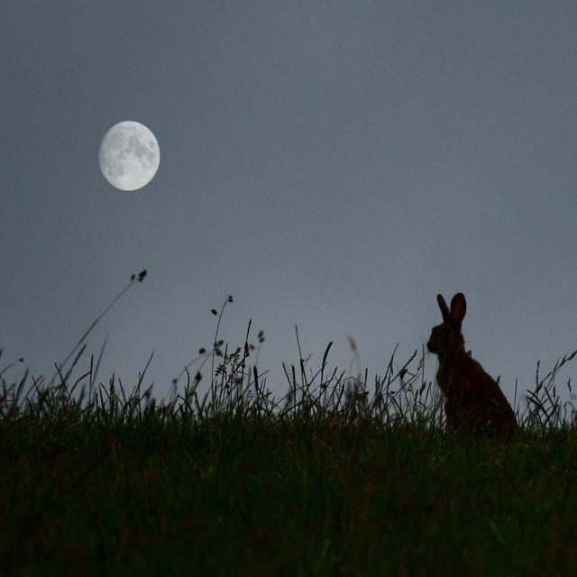 """""""Moon dreams"""" stock image"""