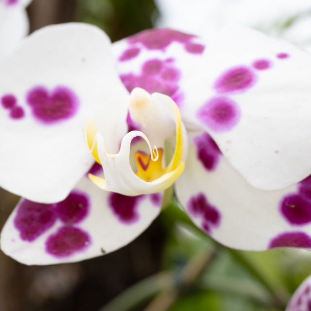 """""""orchid on a garden"""" stock image"""