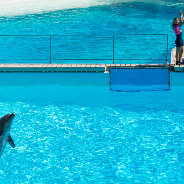 """Dolphin walking on the water"" stock image"