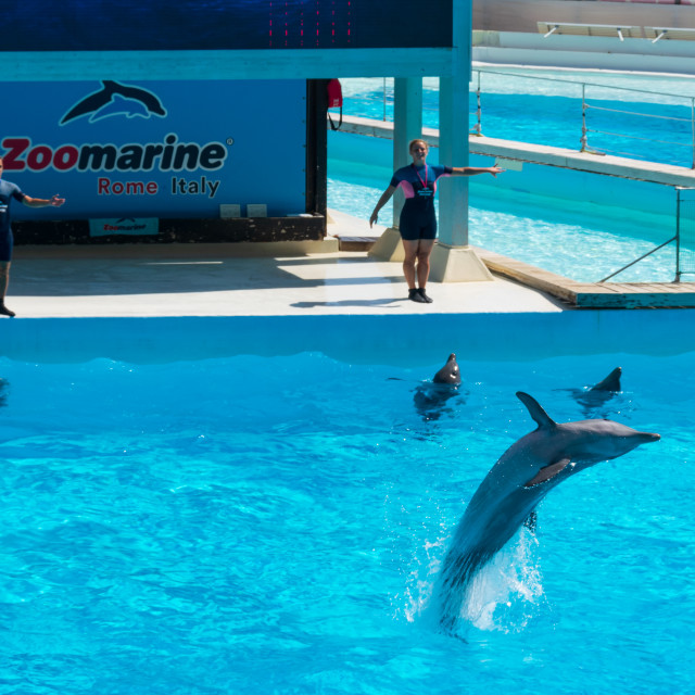 """Dolphin back flip in front of his audience, Zoomarine"" stock image"
