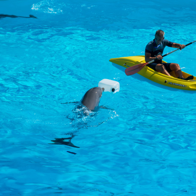 """A man in a lifeboat floating next to the dolphins"" stock image"