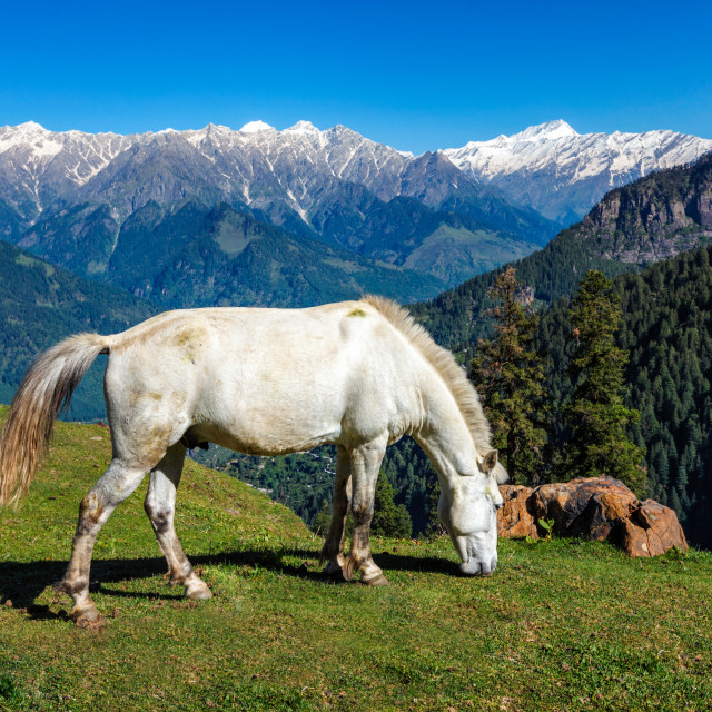 """Horses in mountains. Himachal Pradesh, India"" stock image"