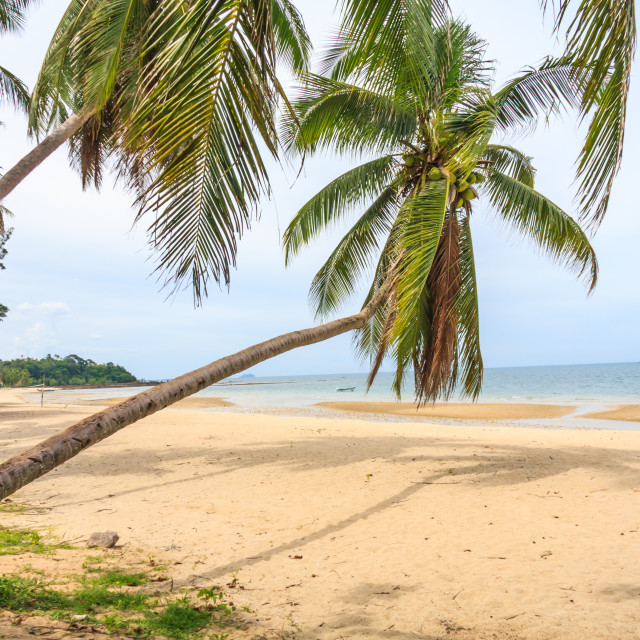 """""""Tropical beach scene with palm trees"""" stock image"""