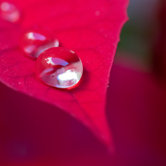 """""""Droplets on a flower"""" stock image"""