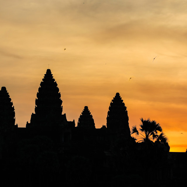 """""""Sun rise with Swifts flying over the Angkor Wat temple in silhou"""" stock image"""