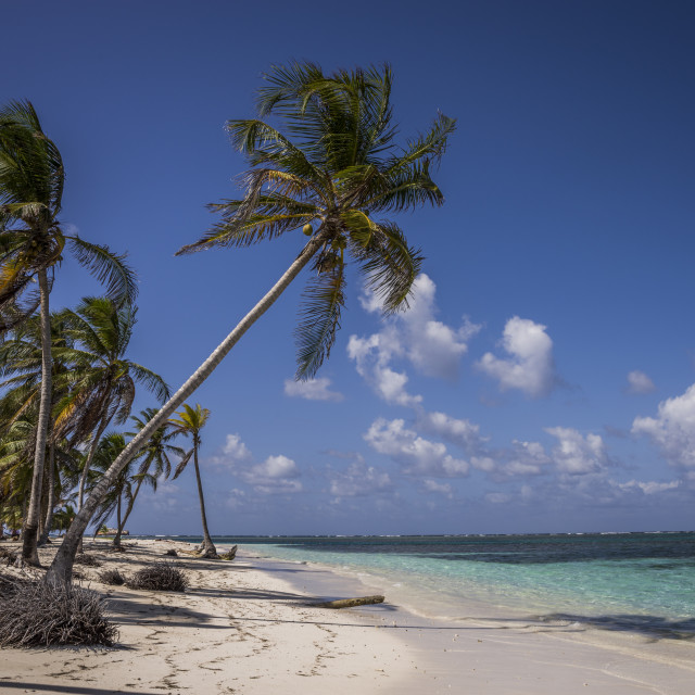 """""""Beach with palms on tropical Island in the Caribbean Sea of Panama"""" stock image"""