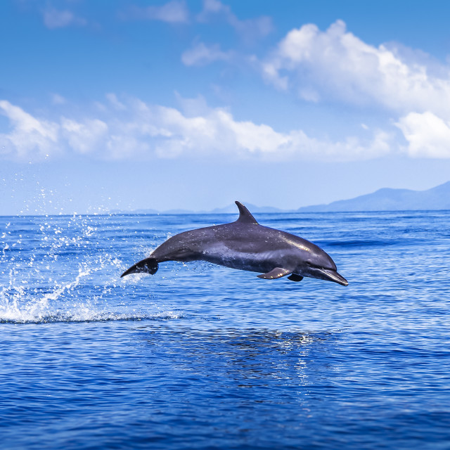 """""""Jumping Dolphin in deep blue sea"""" stock image"""