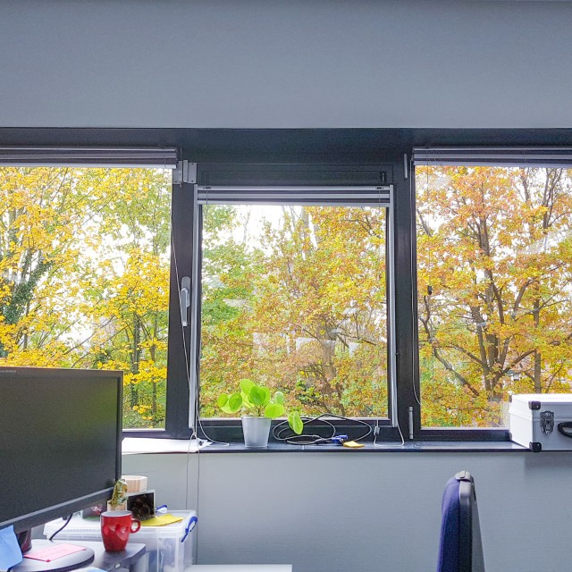 """Office with a view to the fall-colored trees"" stock image"