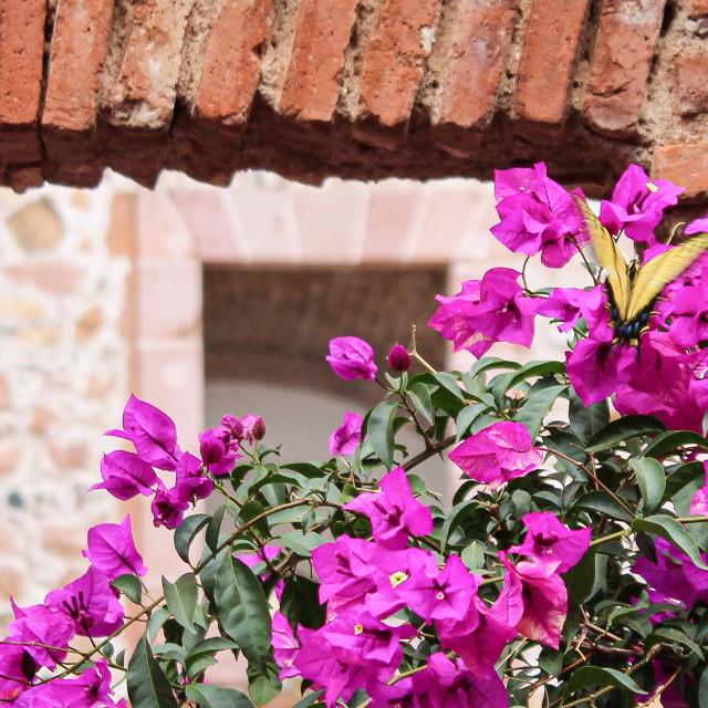 """""""Bougainvillea in a brick hacienda"""" stock image"""