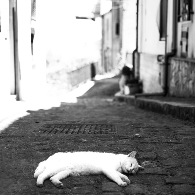 """""""Sicily. A Cat."""" stock image"""
