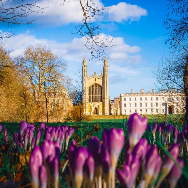 """""""King College Chapel Cambridge UK."""" stock image"""
