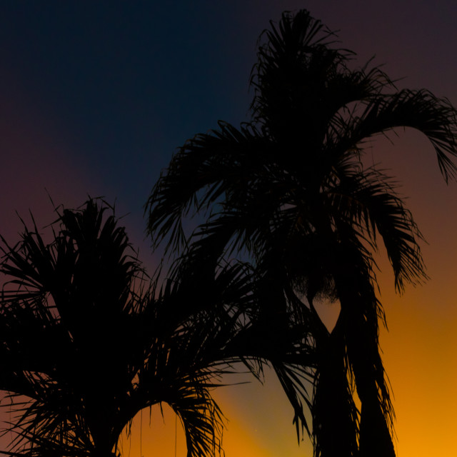 """""""Palm Silhouettes"""" stock image"""