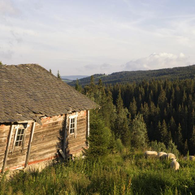 """Old shed near Skeikampen"" stock image"
