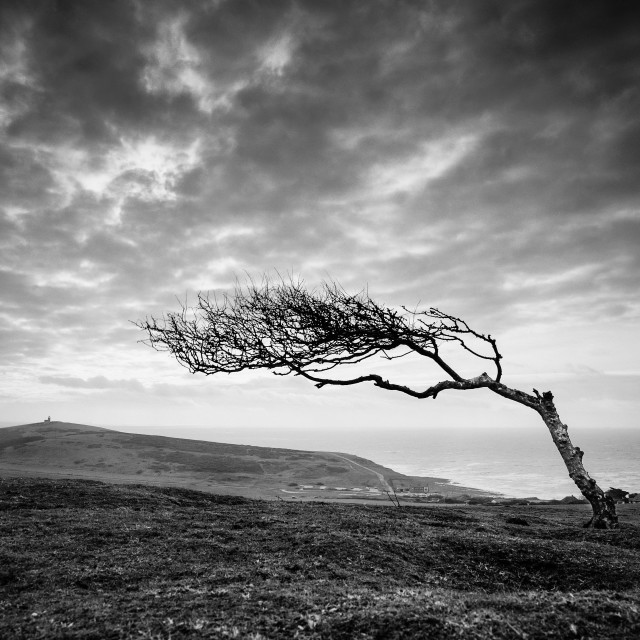 """Windswept tree on Went Hill - East Sussex"" stock image"