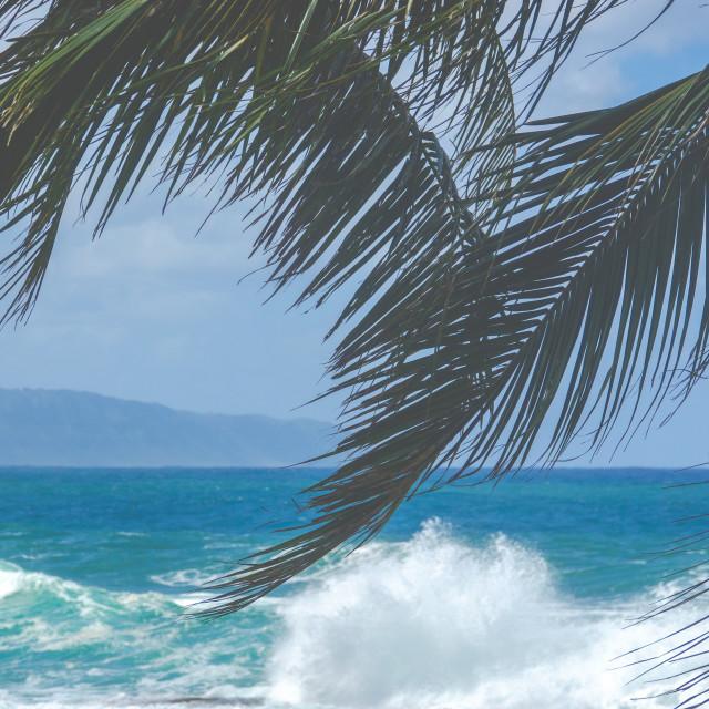 """""""Hawaii North Shore Waves"""" stock image"""