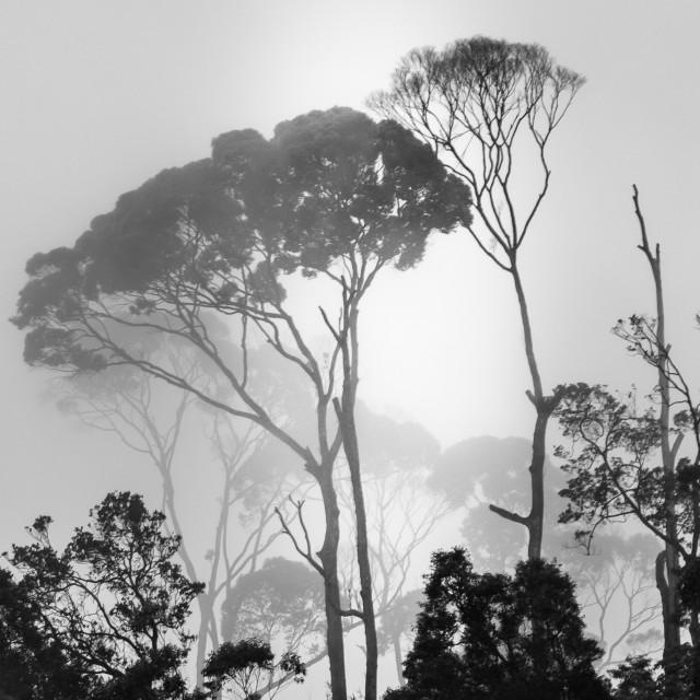 """Fog in Hatton"" stock image"