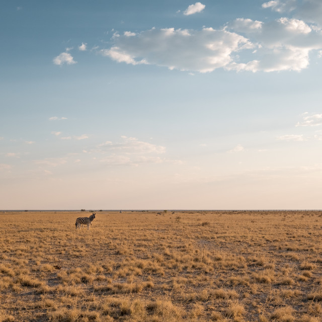 """""""Somewhere in Namibia"""" stock image"""