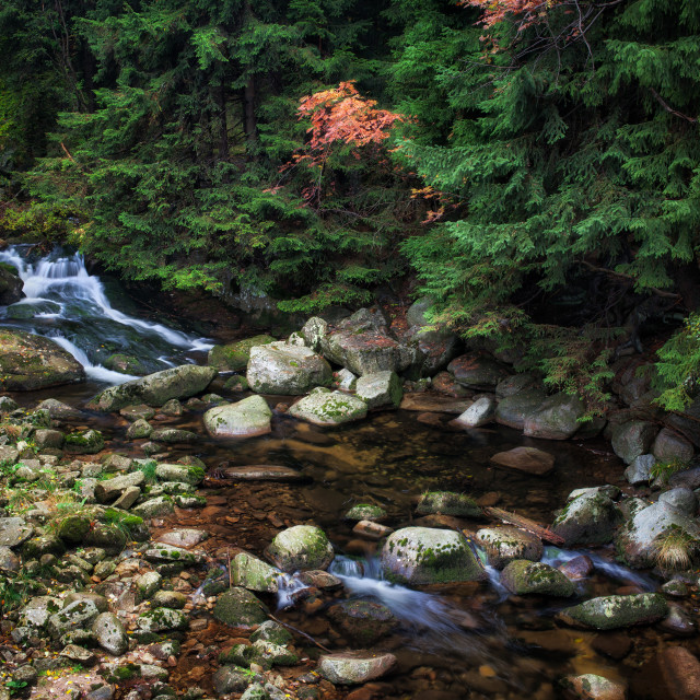 """""""Mountain River in Autumn Forest"""" stock image"""