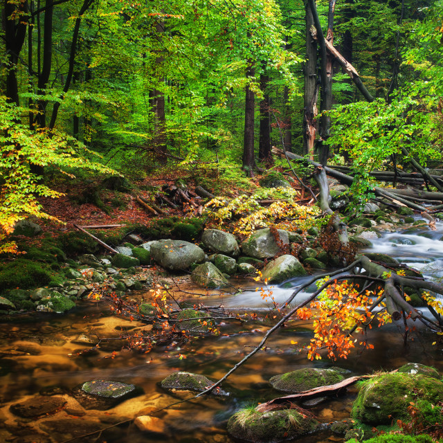 """""""Forest Stream With Fallen Tree"""" stock image"""