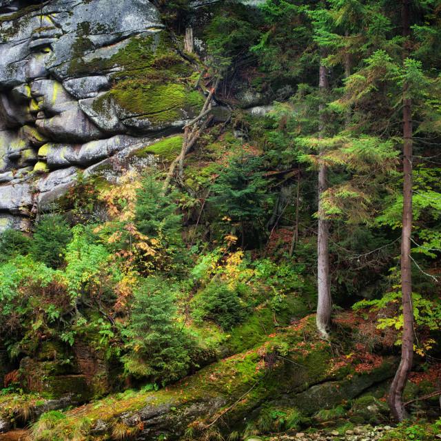 """Autumn Forest on Mountain Slope"" stock image"