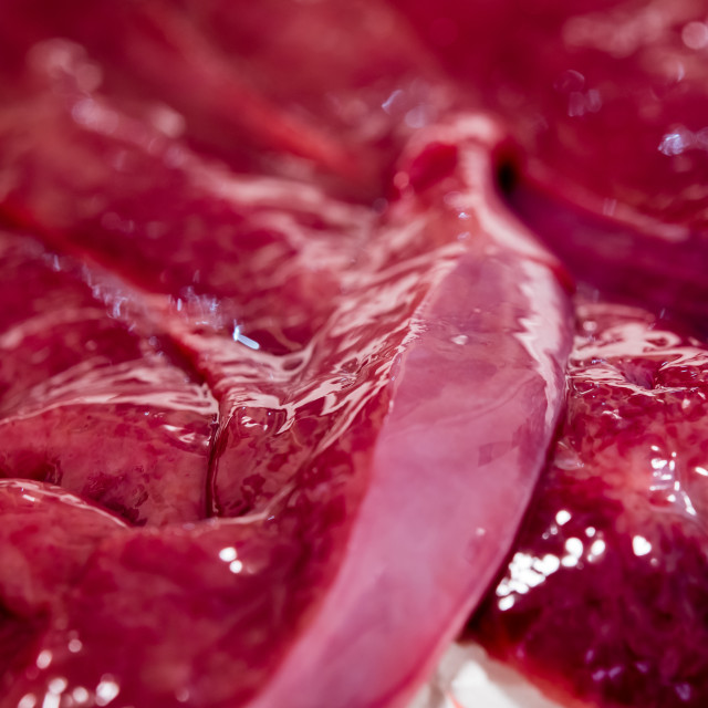 """Liver raw food meat detail"" stock image"