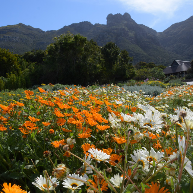 """Kirstenbosch Botanic Garden, Cape Town"" stock image"