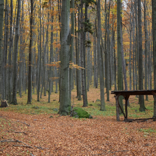 """""""Nature forest"""" stock image"""
