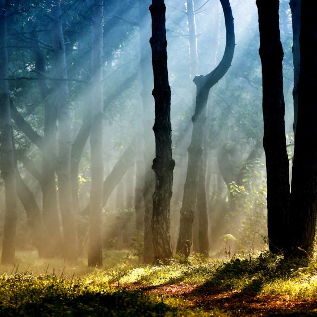 """Morning rays"" stock image"