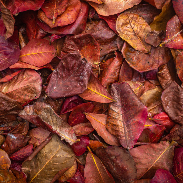 """""""Red Jungle Leaves Background"""" stock image"""